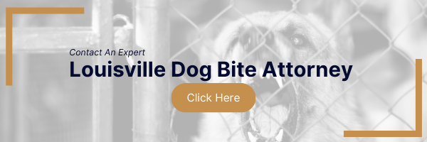 contact an expert louisville dog bite attorney